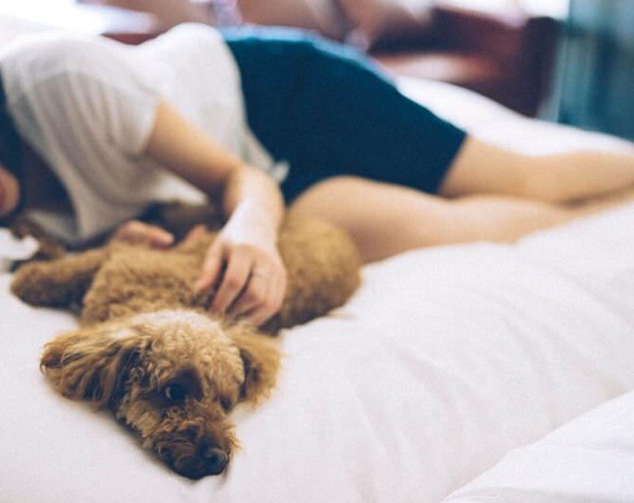 愛犬と泊まれる宿 D+KIRISIMA(霧島観光ホテル)