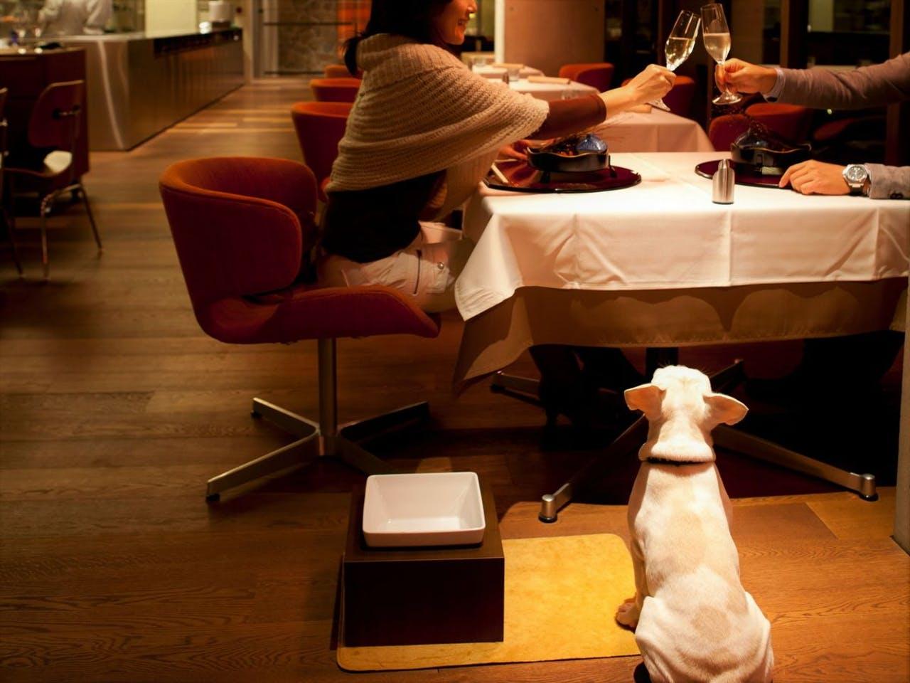 愛犬同伴可能なレストラン