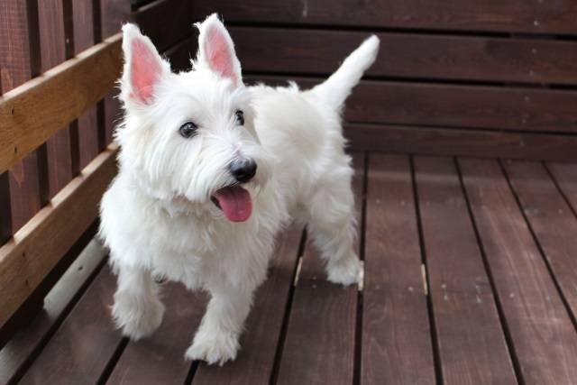 愛犬のお誕生日サービス