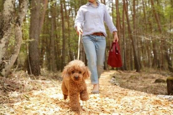 愛犬同伴!客室温泉付!愛犬と一緒に本格懐石料理!<2021年11月30日まで受付中>
