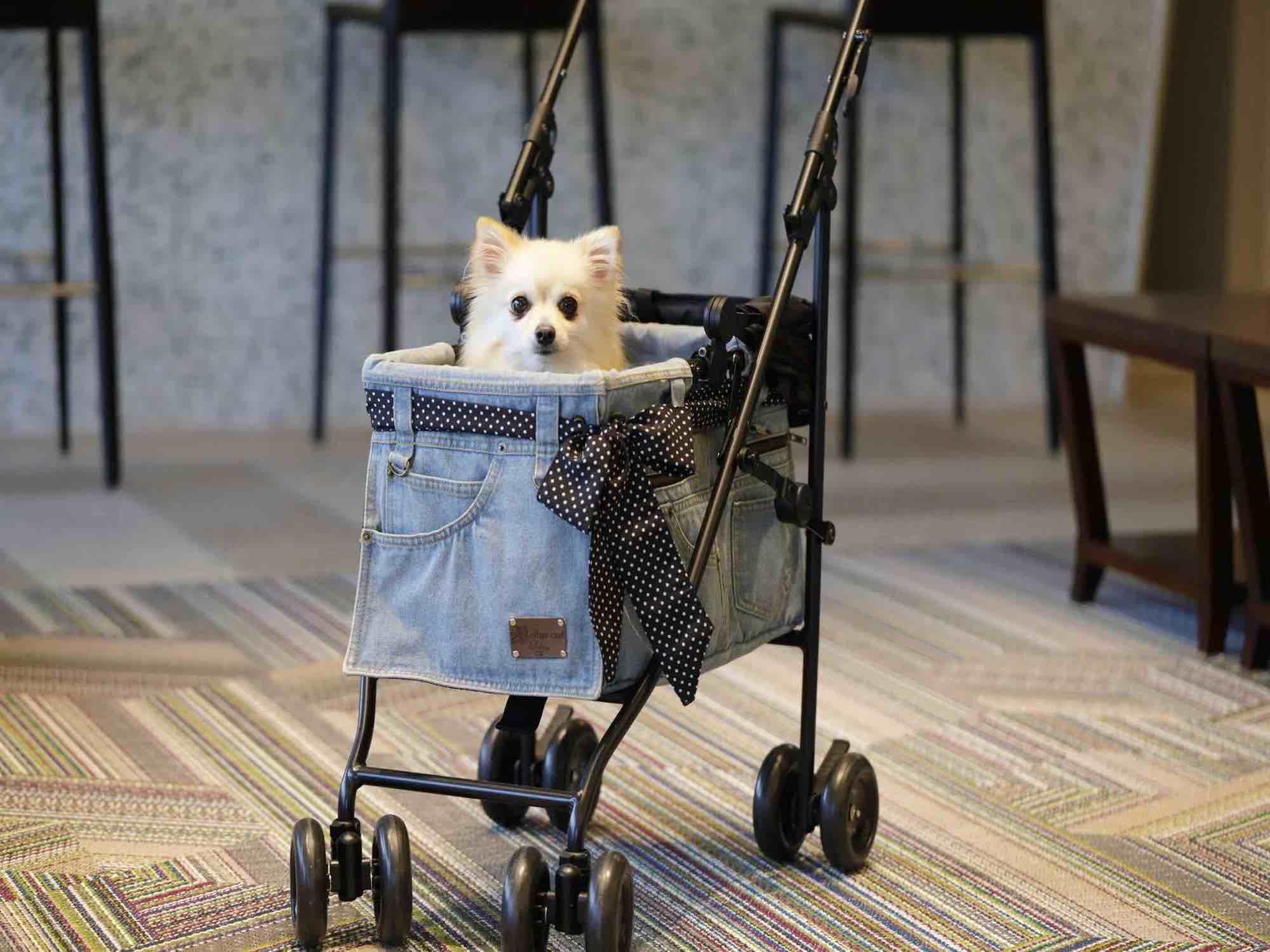 愛犬のための設備