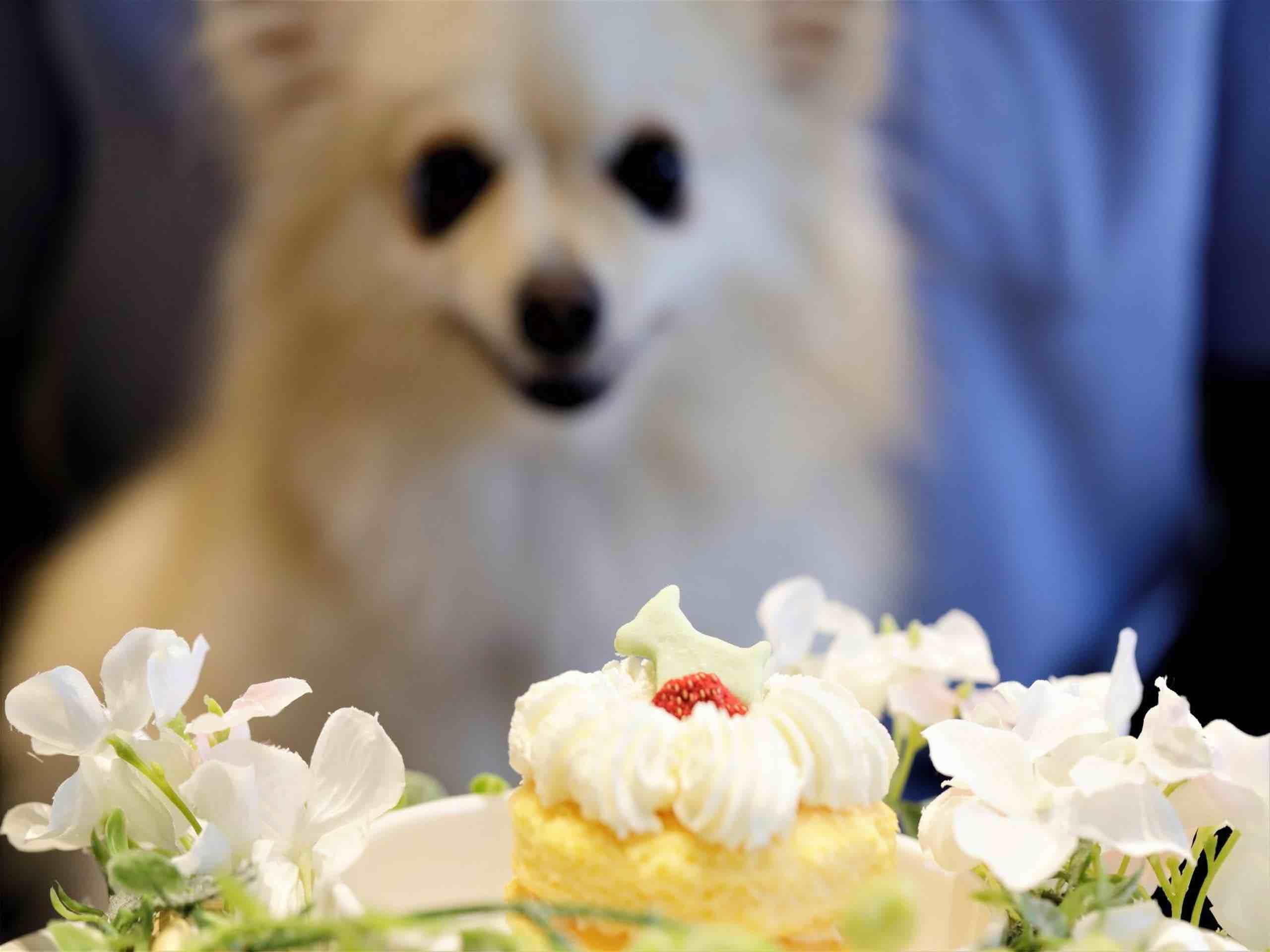 愛犬のお誕生日をお祝い