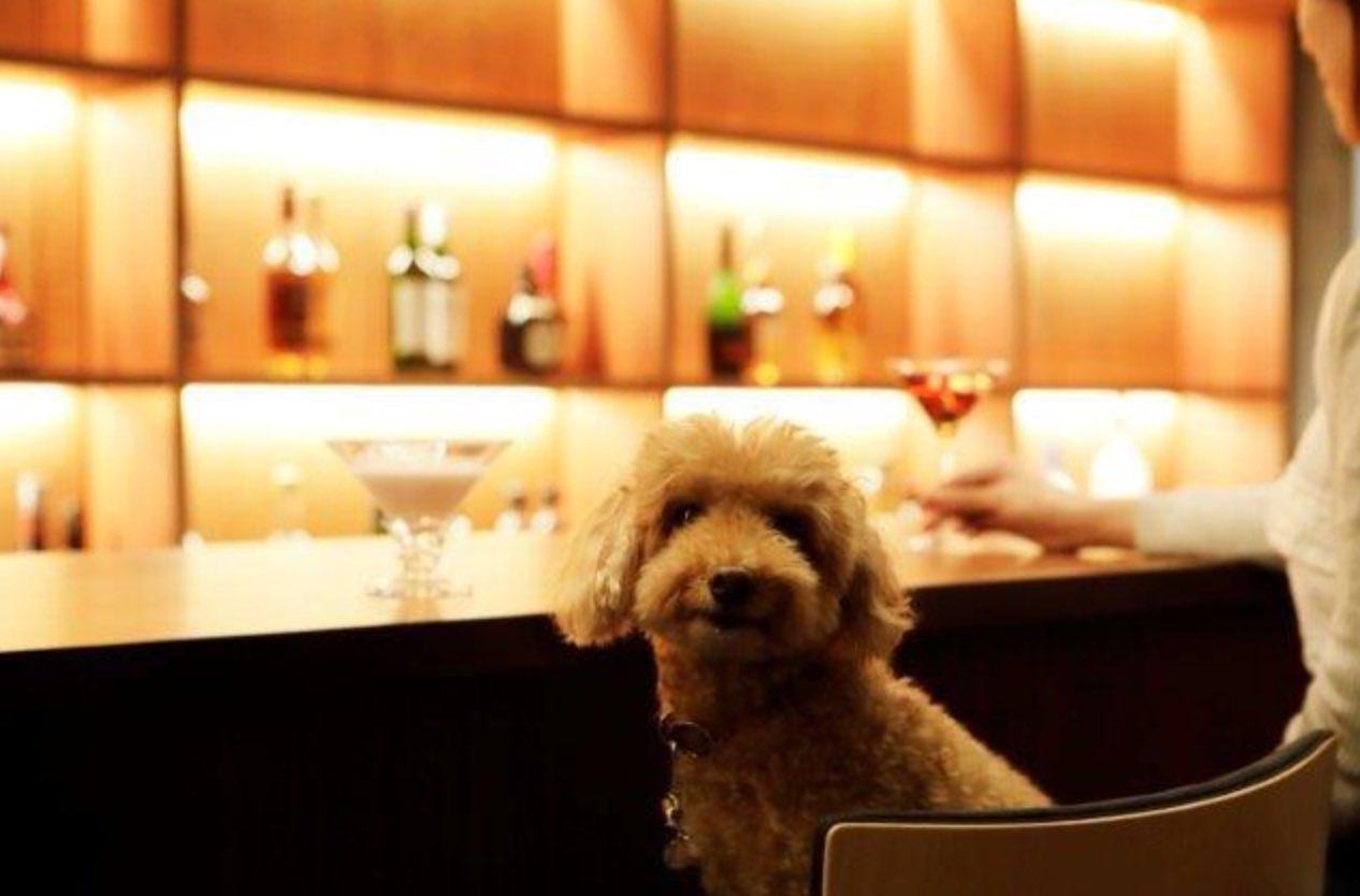 【2021年11月末まで受付中】愛犬と過ごす深いくつろぎと贅沢な時間/本格懐石料理/1泊2食付