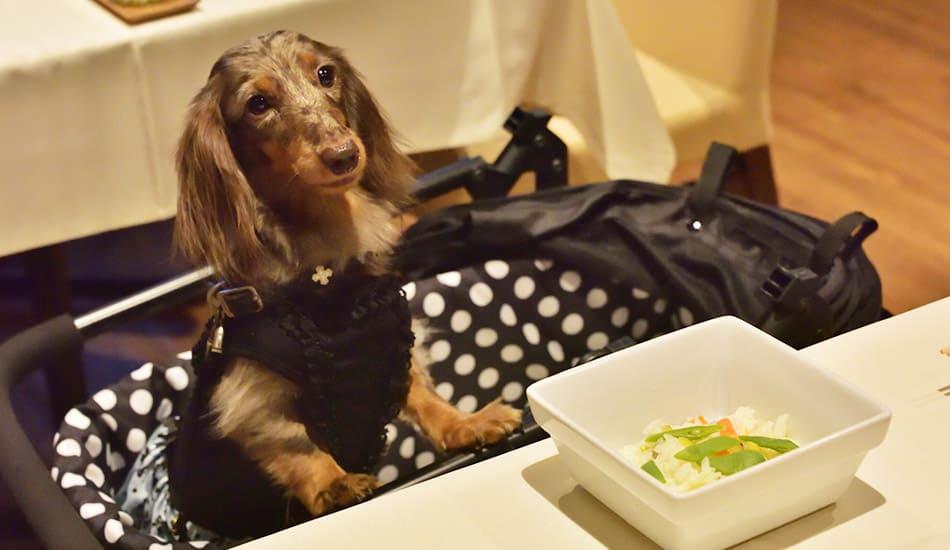 愛犬用お食事