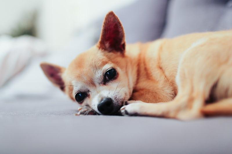 愛犬と古民家リノベーションホテル「NIPPONIA」へ!上質な宿泊体験を