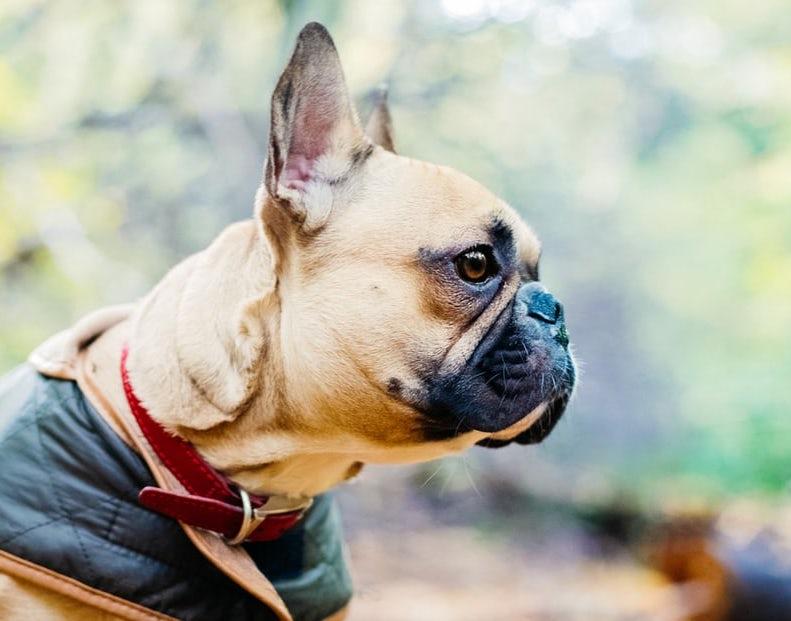 愛犬と「びわ湖バレイ」へ!天空のレジャースポットで圧巻の景色を楽しもう
