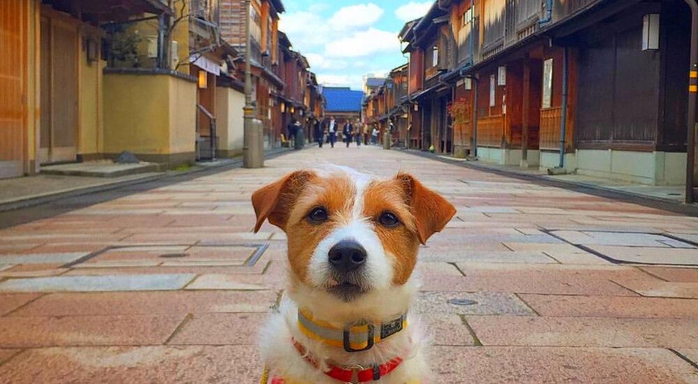 """【石川】犬と情緒溢れる街""""金沢""""へお出かけ!ひがし茶屋街を中心に観光スポットをご紹介"""
