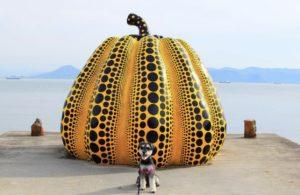 黄色のかぼちゃ