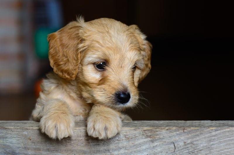 【静岡】愛犬と異国情緒の港町へ!ペリーロードのおすすめスポットをご紹介