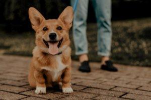 【兵庫】愛犬と淡路島の「CRAFT CIRCUS」で過ごす優雅なひととき