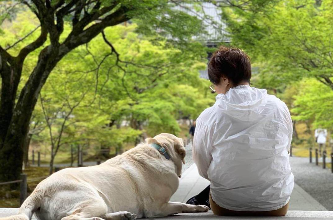【京都】犬と京都のお寺と神社を観光!初めての犬連れ旅行のおすすめスポットをご紹介!