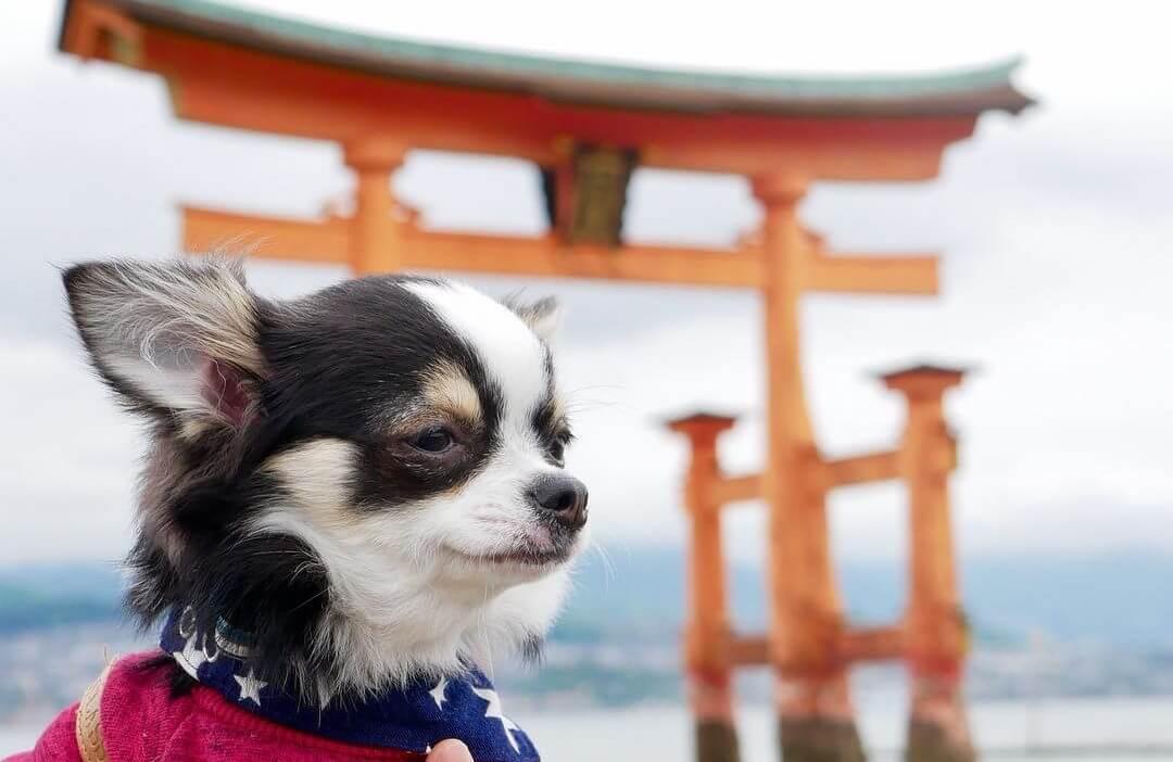 【広島】ペット同伴OK!広島の犬とお出かけできる観光スポットをご紹介!