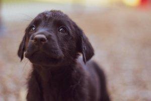 【福島】1日3組限定!愛犬と「アウザ猪苗代」で過ごすペット旅行