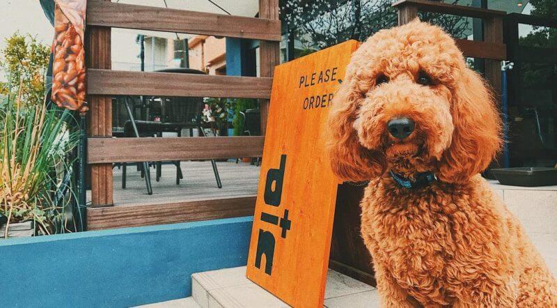 横浜のわんこと行けるドッグカフェ!厳選したおすすめ7選
