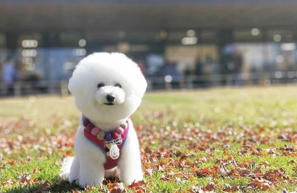 【長野】犬と一緒に行ける軽井沢観光!グルメ・絶景・ショッピングスポットをご紹介