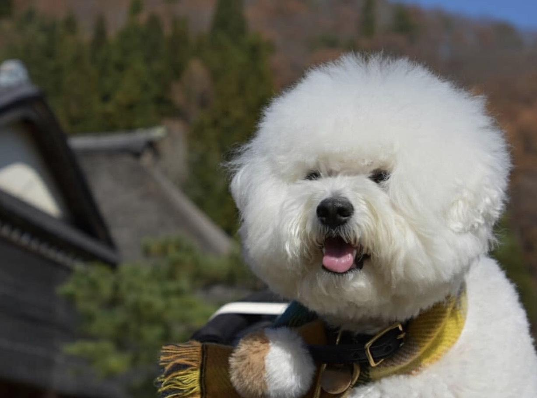 【福島】愛犬と会津にお出かけ!!大内宿など定番の観光スポットをお届けします