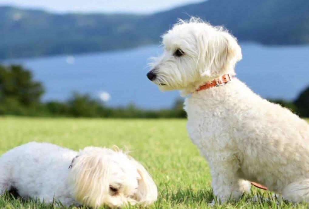 【神奈川】犬と箱根にお出かけ!犬連れで楽しめる観光スポットをご紹介