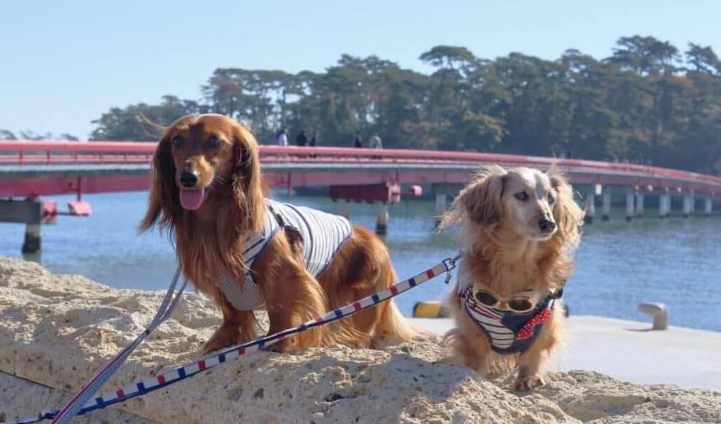 【宮城】愛犬と日本三景「松島」にお出かけ!一緒に周れる観光スポットをご紹介