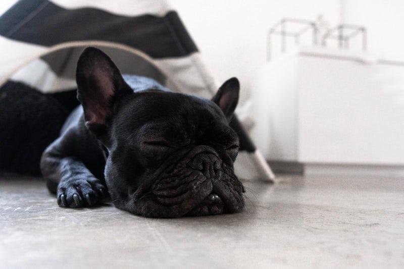 北陸の部屋食ができるペットと泊まれる宿5選!愛犬とゆったりお部屋で寛ごう