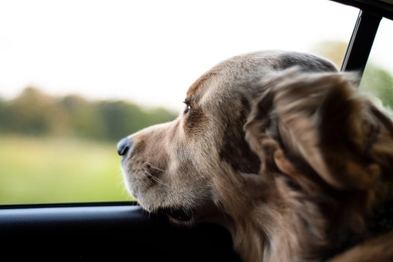 【ランキング】長野のペットと泊まれる宿TOP10!愛犬と旅行に行こう
