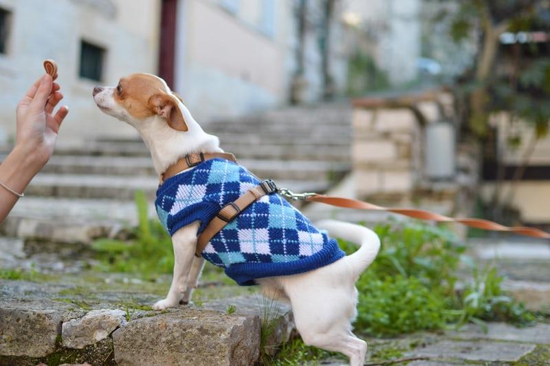 山梨のペットと泊まれる宿ランキングTOP10!自然や景色を愛犬と満喫しよう