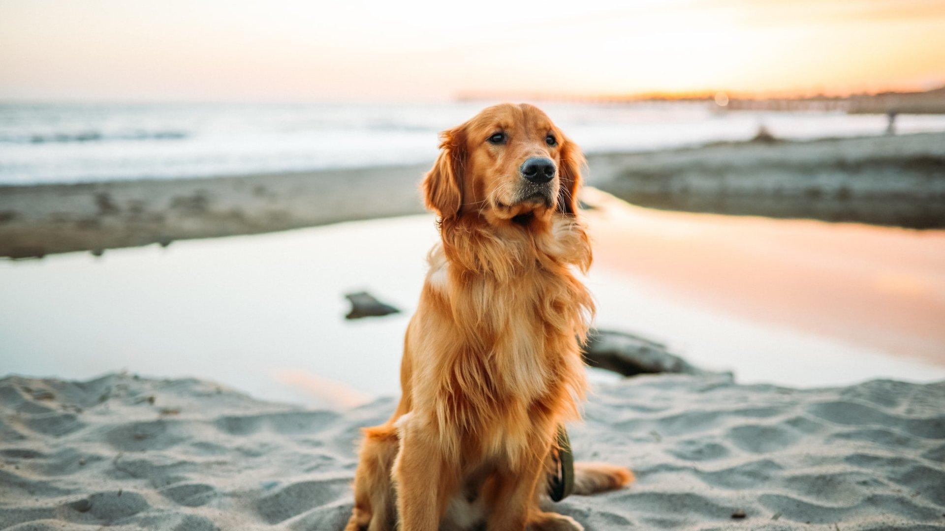 【大型犬OK】関東からアクセス良好のペットと泊まれる宿10選!特徴別にご紹介します