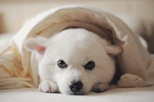 福島のペットと泊まれる宿5選!愛犬とゆったりできる宿が多数