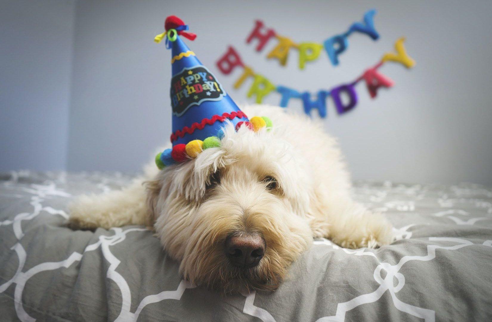 愛犬と最高のお誕生日旅行を!愛犬の誕生日におすすめしたいペットと泊まれる宿10選