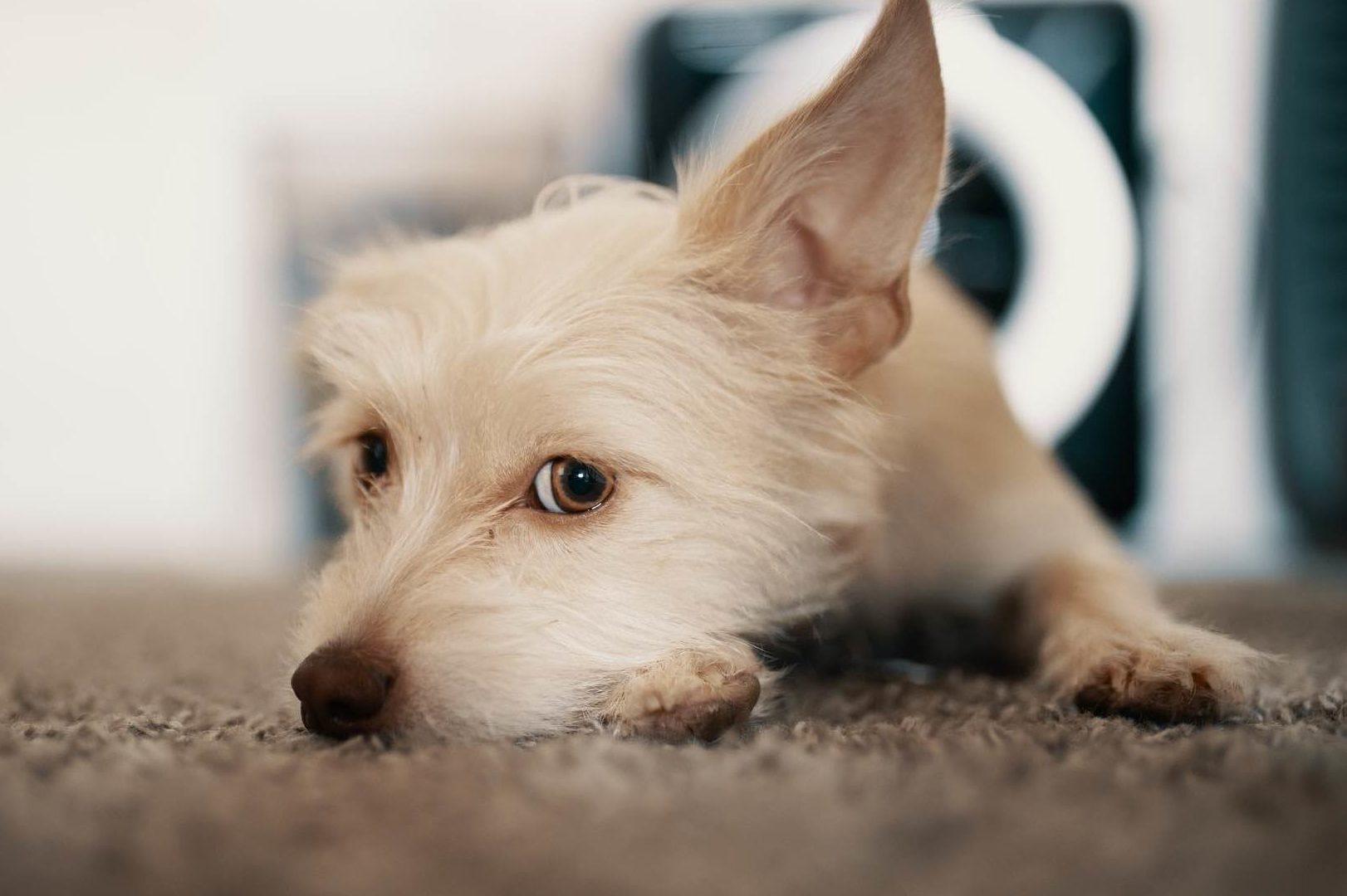 【九州】露天風呂付き客室のあるペットと泊まれる宿7選!愛犬と温泉でまったりしよう