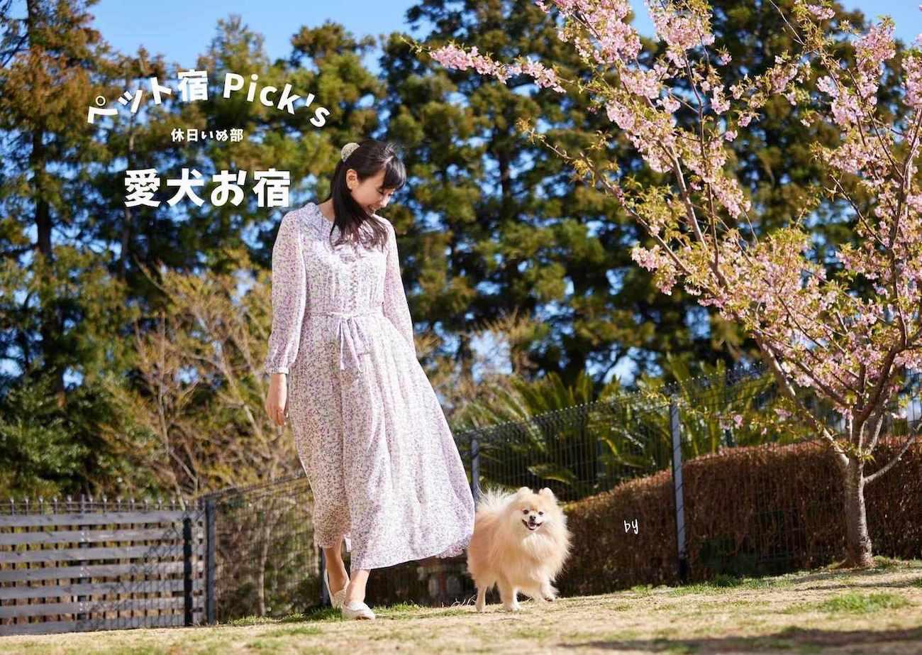【静岡・伊豆】最高のホスピタリティでお出迎え!「接客」ではなく「接犬」を徹底する愛犬リゾート「愛犬お宿」