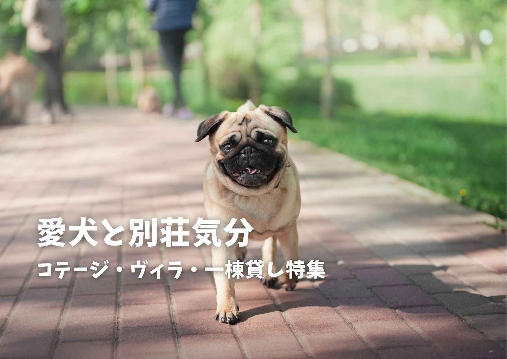 愛犬と別荘気分!ペットと泊まれるコテージ・ヴィラ・一棟貸し特集